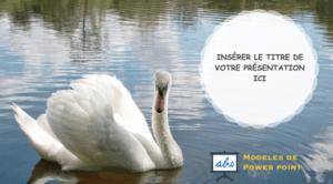 cygne - des animaux incoyables pour ta presentation de PPT